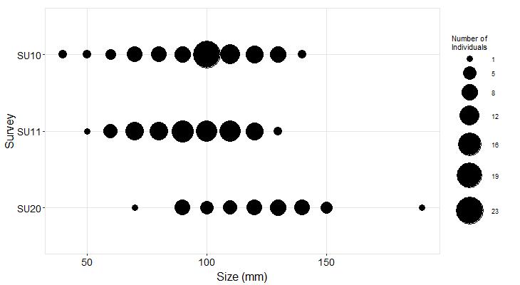 Phillips Gulch Pisaster size plot